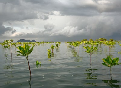 Stormy Morning Mangroves - Photo : aes_abroad