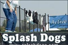 Get wet! SplashDogs at Cal Expo