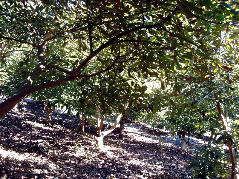 Inside avo grove 3.JPG
