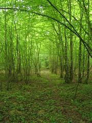 [Photo de forêt verte]