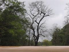 Kollibacchalu Dam -Malenadu Heavy Rain Effects Photography By Chinmaya M.Rao   (75)