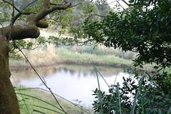 陽明山-小湖