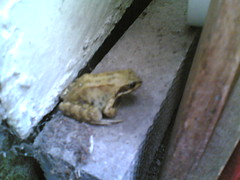 Frog in lean-to