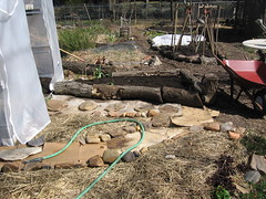 Before photo of new garden beds
