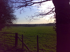 Late Afternoon Finchampstead Fields