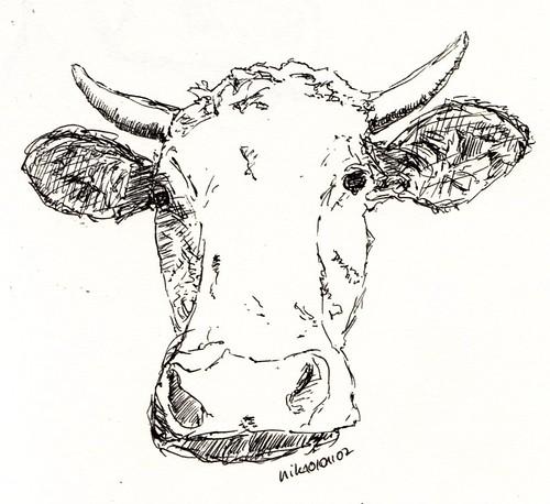 Weissbraune Kuh