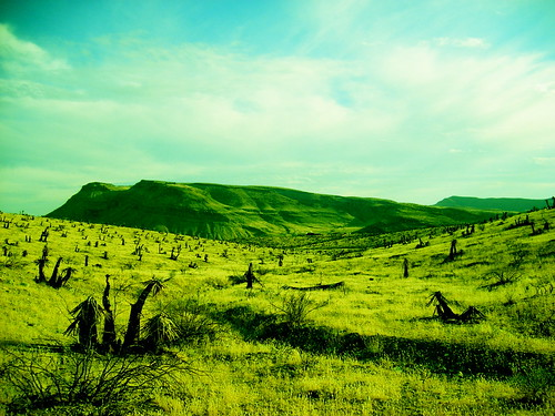 Verdant Desert