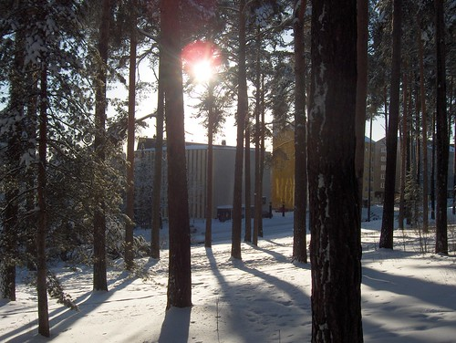 Trees in the Shadows of Sharp Sun Light