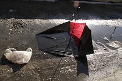 red and black umbrella