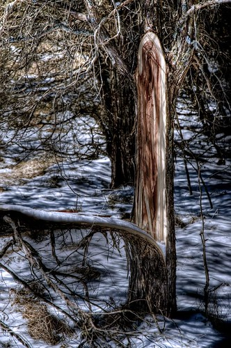 split-tree HDR1