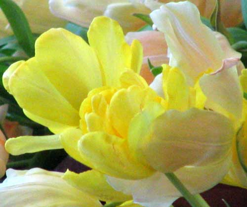 2007-02-24-124_crop_sm