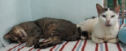 Cattery_FivCats_20070101_06x