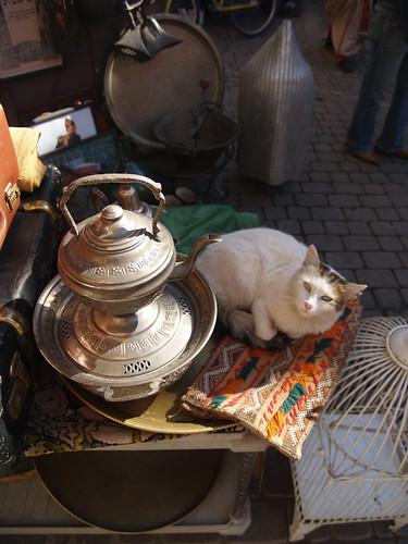 souq cat, marrakech
