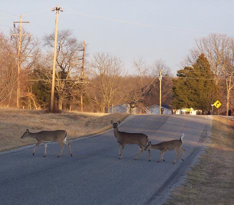 Deer X'ing