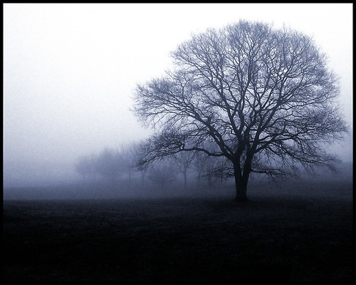 Mourning Tree, by Destiny's Agent @ Flickr