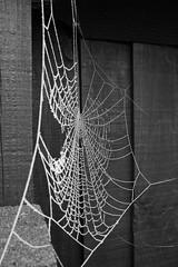 Frozen Web 2