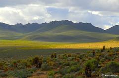 Northern Cape Landscape (Aloe habitat)