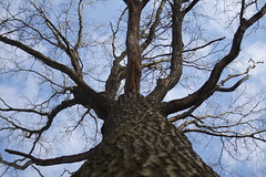 Posted Tree