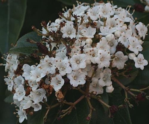 blossom_enhance