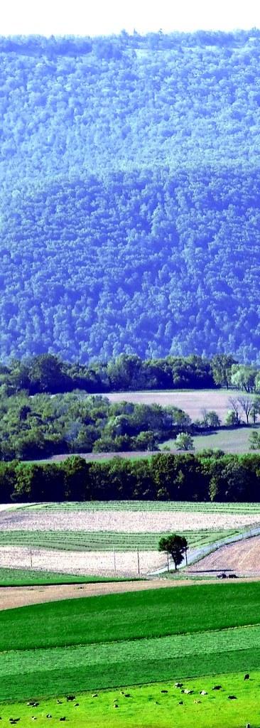 spring fields 2