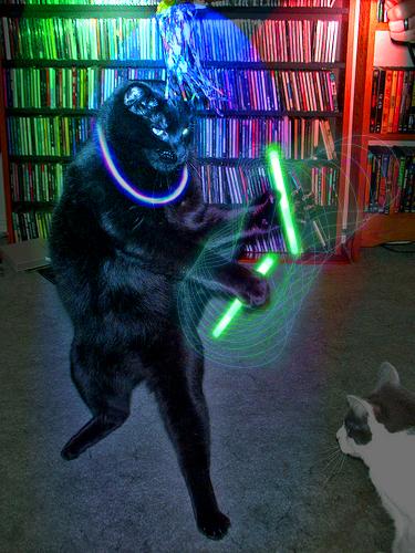 Rave Cat