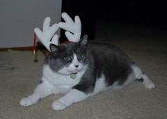 Reindeer Musubi
