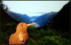 Kiwi in Doubtfull sound ;-)