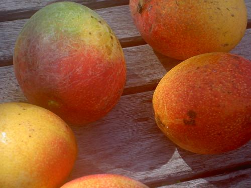 mangos one