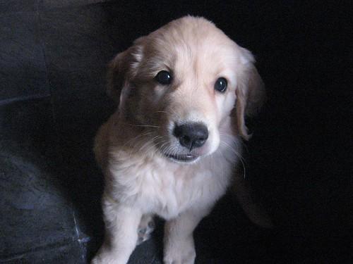 Phoebe at 8 weeks