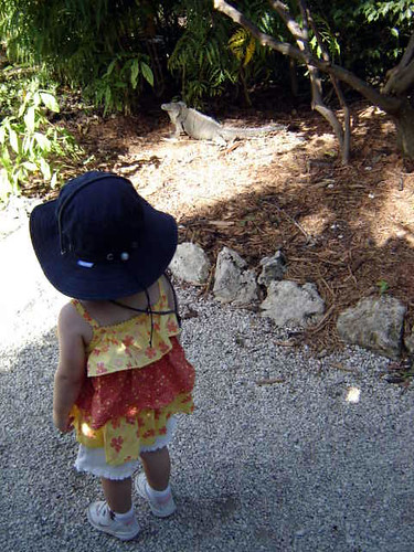 Joy spotting our first blue iguana