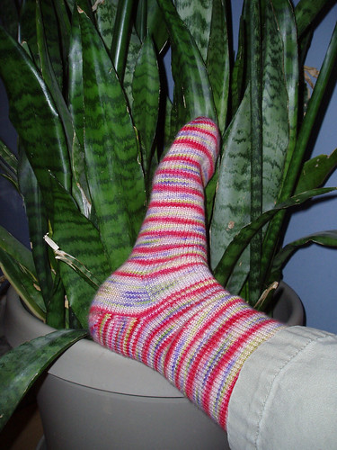 The sock really likes the plant