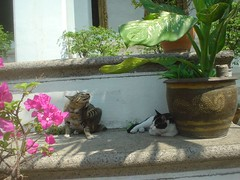 028.臥佛寺的貓