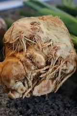 Celeriac, the king of ugly