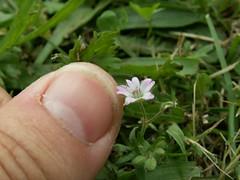 Flower/thumb