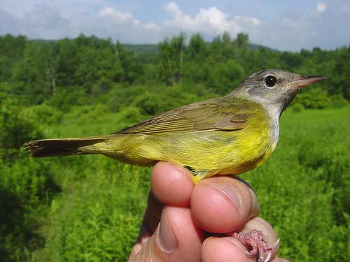 birdQUIZ picture