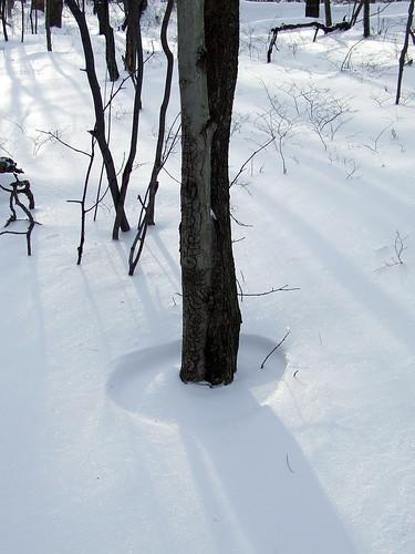 black birch snow ring