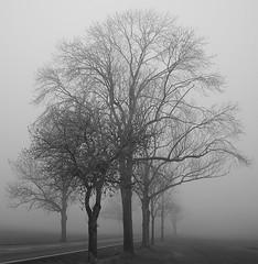 Seltsam, im Nebel zu wandern