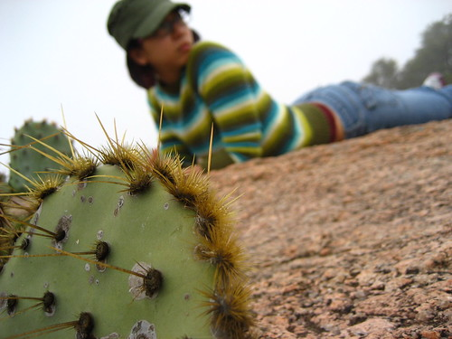 prickly pear cactus and elissa