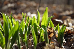 The Leeks are Up - March 30