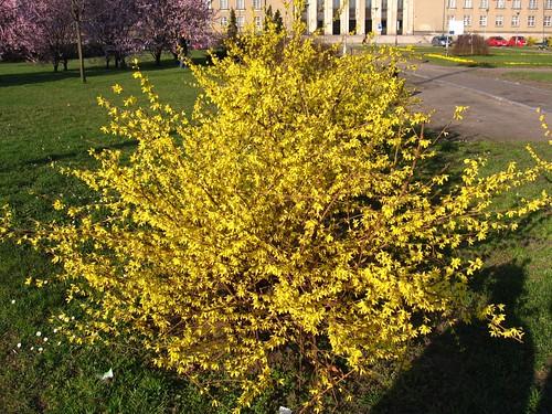 Wiosennie (żółto - znowu)