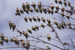 Migrating Birds-02