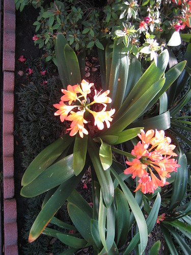 Orange flowers in a neighbor's garden
