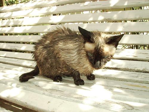 na het wassen, net een rat!