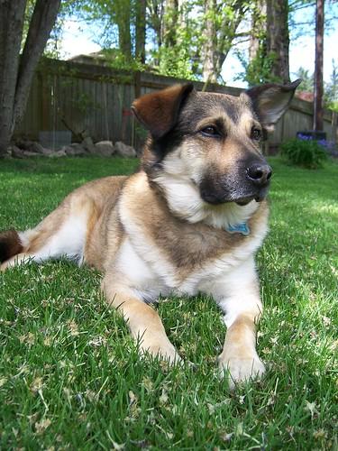 Barkley Dog