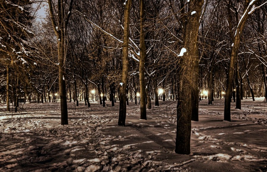 Snowy Forest of Kharkov