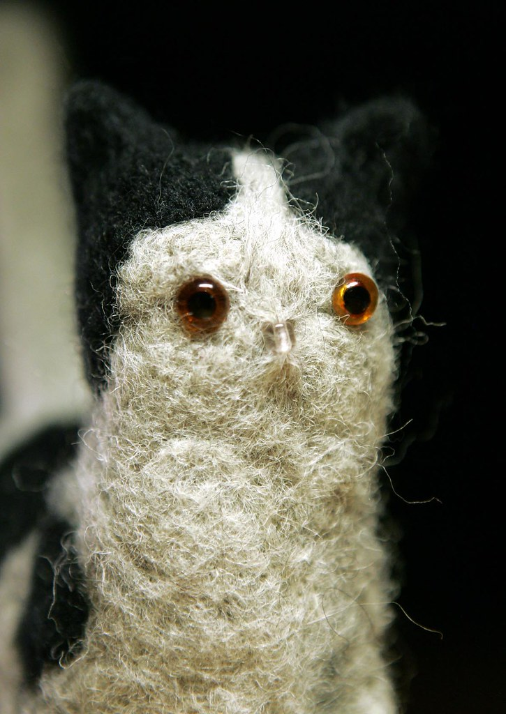 a white Woolcat with black spots close-up