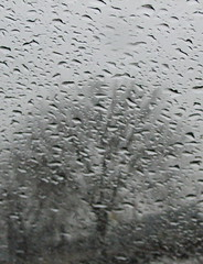 Rainy window, rainy tree