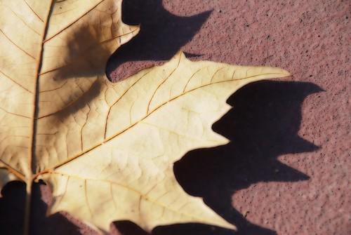 Fallen leaf / Hoja ca�da