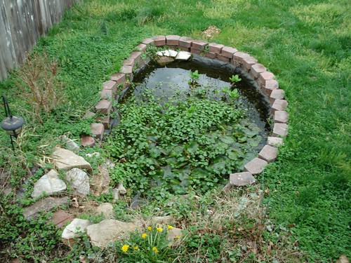 Before - Pond