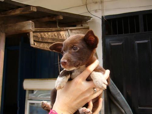 cute puppy #1,942